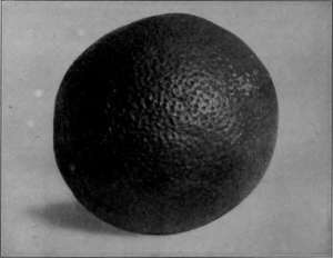 Fig-107-Picture-of-an-Orange-on-Blue-Cloth